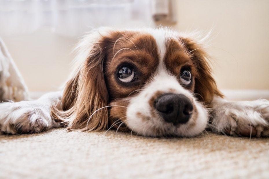 Piątka dla zwierząt - treść ustawy